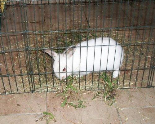 Bunny und ich